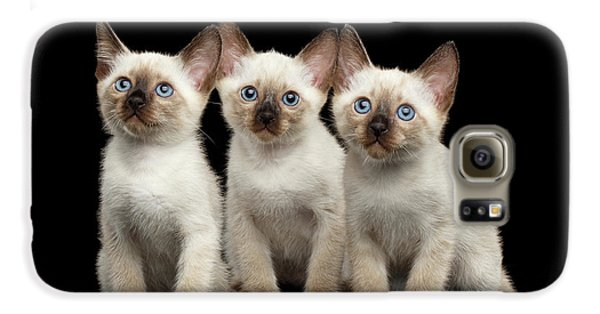 Cat Galaxy S6 Case - Three Kitty Of Breed Mekong Bobtail On Black Background by Sergey Taran