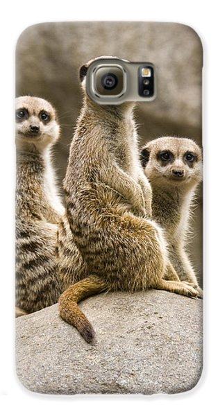 Meerkat Galaxy S6 Case - Three Meerkats by Chad Davis