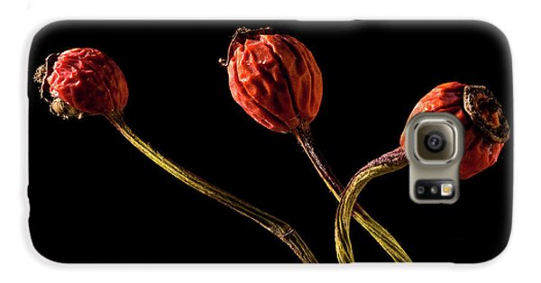 Three Rose Hips Galaxy S6 Case by  Onyonet  Photo Studios