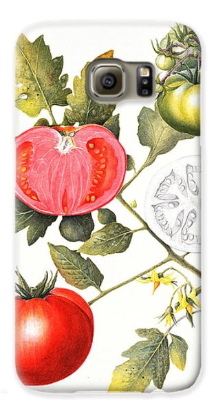 Tomatoes Galaxy S6 Case by Margaret Ann Eden