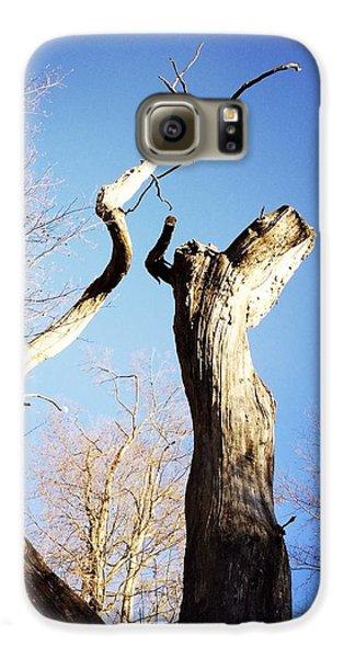 Sky Galaxy S6 Case - Tree by Matthias Hauser