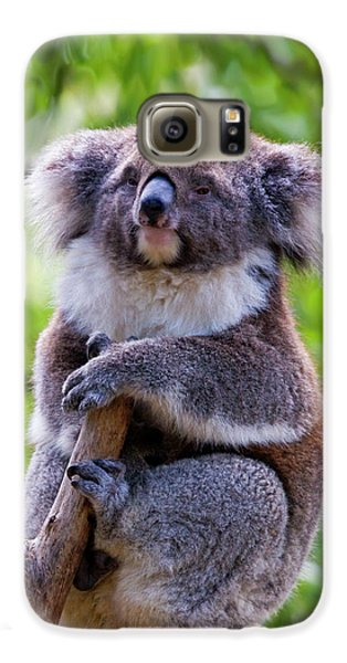 Treetop Koala Galaxy S6 Case