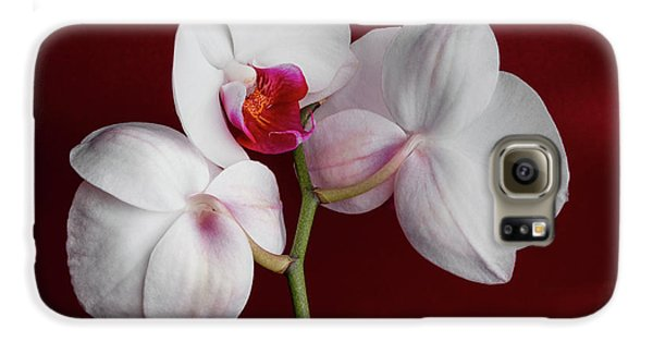 Orchid Galaxy S6 Case - Trio Of Orchids by Tom Mc Nemar
