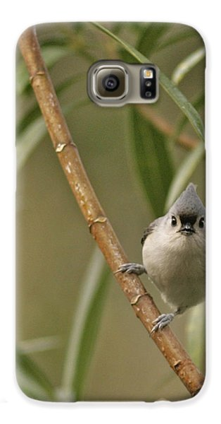 Titmouse Galaxy S6 Case - Tufted Titmouse by Phill Doherty