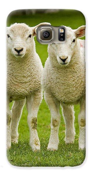 Twin Lambs Galaxy S6 Case by Meirion Matthias