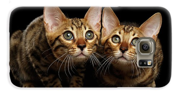 Two Bengal Kitty Looking In Camera On Black Galaxy S6 Case by Sergey Taran