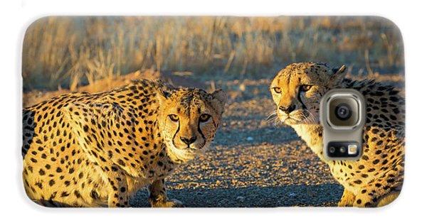 Two Cheetahs Galaxy S6 Case