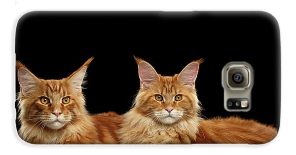 Cat Galaxy S6 Case - Two Ginger Maine Coon Cat On Black by Sergey Taran