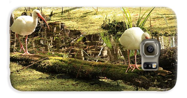 Two Ibises On A Log Galaxy S6 Case by Carol Groenen