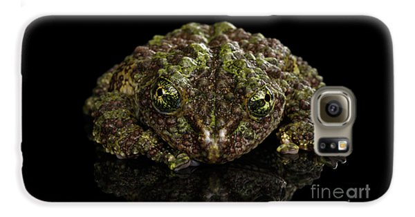 Vietnamese Mossy Frog, Theloderma Corticale Or Tonkin Bug-eyed Frog, Isolated On Black Background Galaxy S6 Case