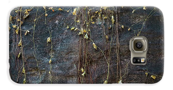 Galaxy S6 Case featuring the photograph Vines On Rock, Bhimbetka, 2016 by Hitendra SINKAR