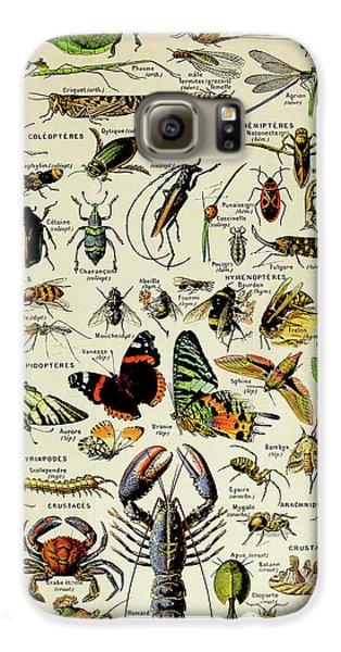 Vintage Illustration Of Various Invertebrates Galaxy S6 Case
