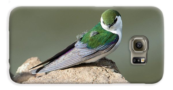 Violet-green Swallow Galaxy S6 Case