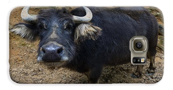 Water Buffalo On Dry Land Galaxy S6 Case