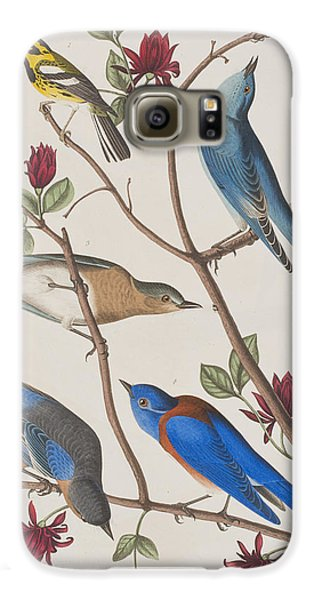 Bluebird Galaxy S6 Case - Western Blue-bird by John James Audubon