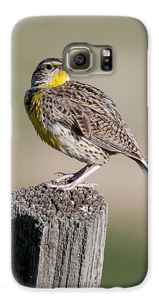 Galaxy S6 Case featuring the photograph Western Meadowlark by Gary Lengyel