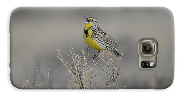 Meadowlark Galaxy S6 Case - Western Meadowlark by Whispering Peaks Photography