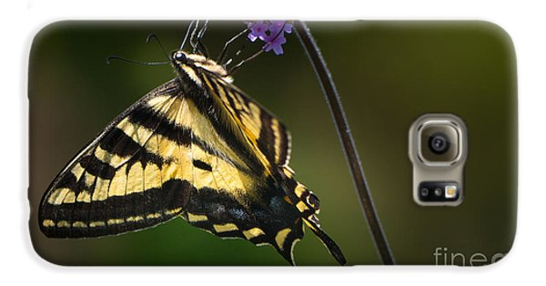 Western Tiger Swallowtail Butterfly On Purble Verbena Galaxy S6 Case