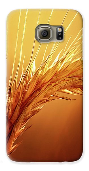 Colours Galaxy S6 Case - Wheat Close-up by Johan Swanepoel