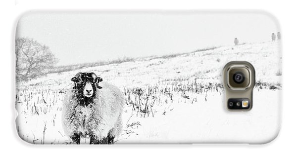 Sheep Galaxy S6 Case - Which Way Is South? by Janet Burdon