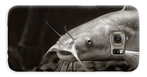 Catfish Galaxy S6 Case - White Cat by Susan Capuano