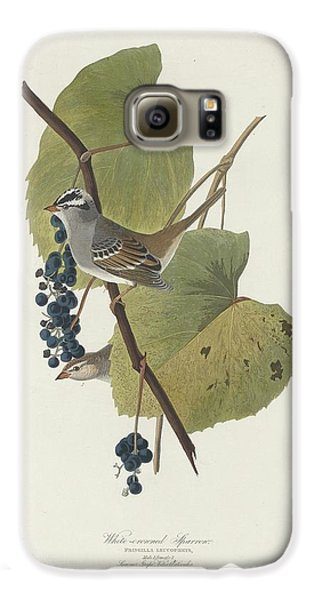 White-crowned Sparrow Galaxy S6 Case by Anton Oreshkin
