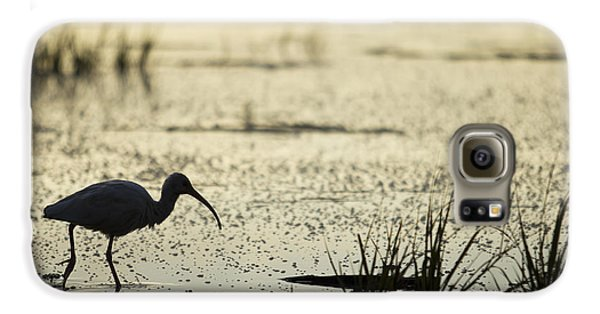 White Ibis Morning Hunt Galaxy S6 Case
