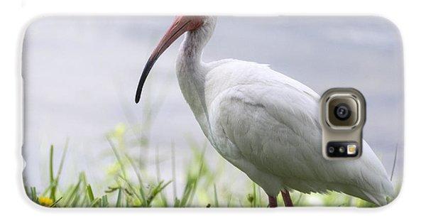 White Ibis  Galaxy S6 Case by Saija  Lehtonen