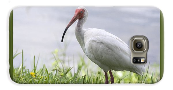 White Ibis  Galaxy S6 Case
