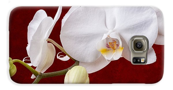 Orchid Galaxy S6 Case - White Orchid Closeup by Tom Mc Nemar