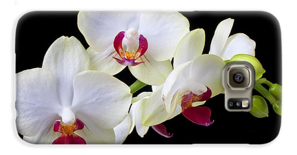Orchid Galaxy S6 Case - White Orchids by Garry Gay