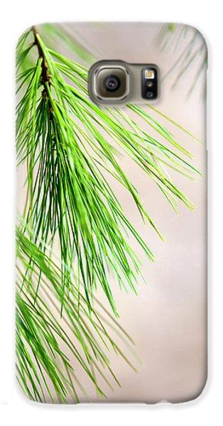 White Pine Branch Galaxy S6 Case by Christina Rollo