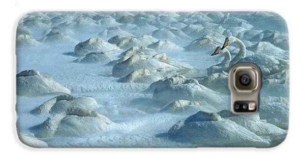 Whooper Swans In Snow Galaxy S6 Case by Teiji Saga and Photo Researchers