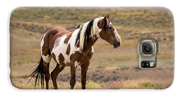 Wild Mustang Stallion Picasso Of Sand Wash Basin Galaxy S6 Case