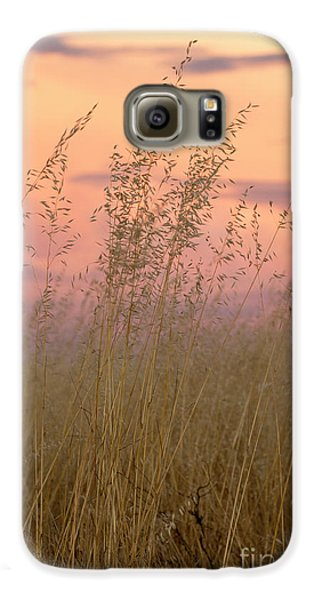 Galaxy S6 Case featuring the photograph Wild Oats by Linda Lees