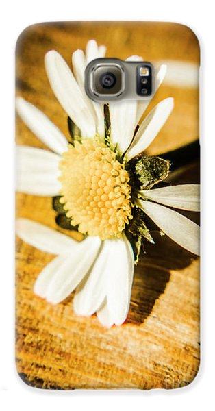 Daisy Galaxy S6 Case - Wilt by Jorgo Photography - Wall Art Gallery