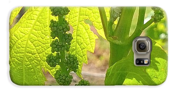 #wine On The #vine 😊 #vineyard Galaxy S6 Case