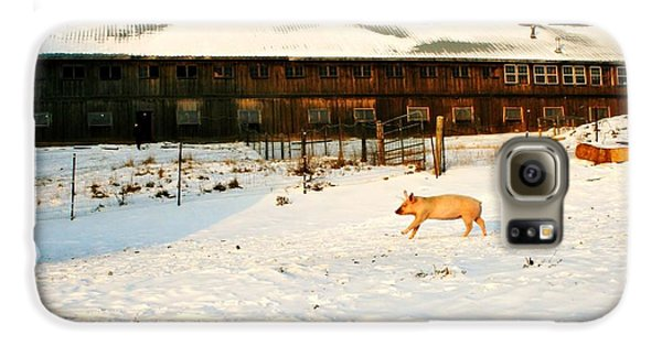 Winnie At Heartland Farm Sanctuary Galaxy S6 Case