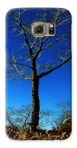 Winter Tree Galaxy S6 Case