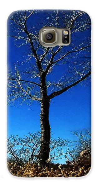 Winter Tree Galaxy S6 Case