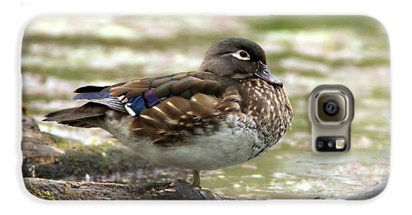 Wood Duck Hen Galaxy S6 Case