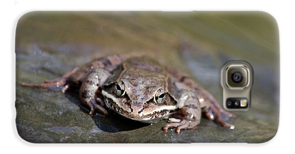 Galaxy S6 Case featuring the photograph Wood Frog Close Up by Christina Rollo