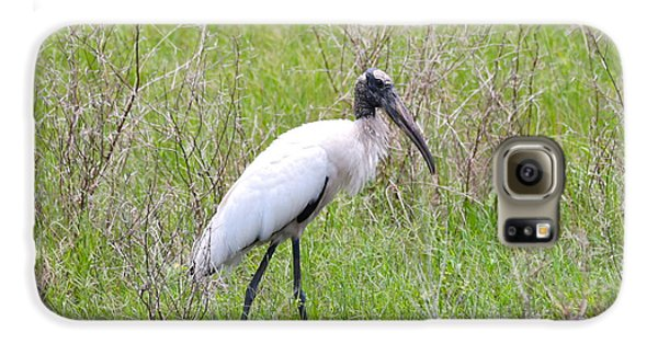 Wood Stork In The Marsh Galaxy S6 Case