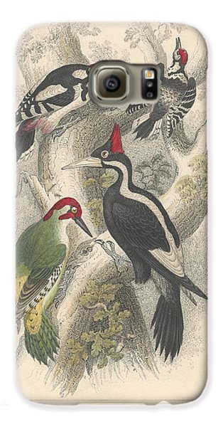 Woodpeckers Galaxy S6 Case by Dreyer Wildlife Print Collections
