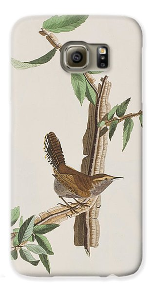 Wren Galaxy S6 Case by John James Audubon