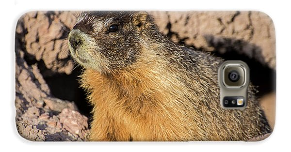 Yellow-bellied Marmot - Capitol Reef National Park Galaxy S6 Case by Gary Whitton
