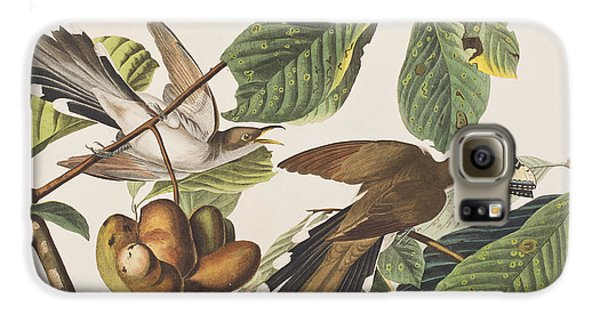 Cuckoo Galaxy S6 Case - Yellow Billed Cuckoo by John James Audubon