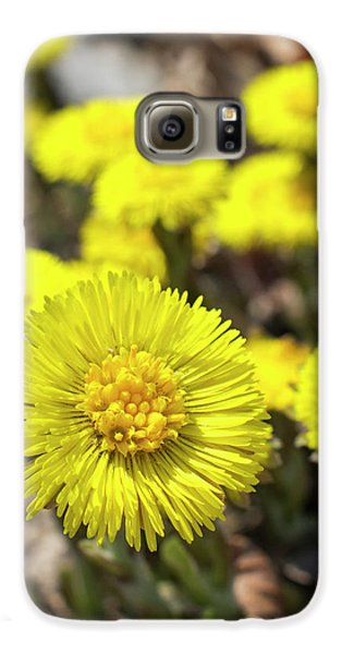 Galaxy S6 Case featuring the photograph Yellow Coltsfoot Flowers by Christina Rollo