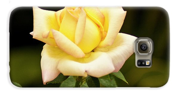 Galaxy S6 Case featuring the photograph Yellow Rose by Bill Barber