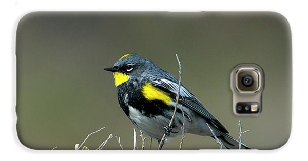 Yellow-rumped Warbler Galaxy S6 Case by Mike Dawson